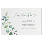 Save-the-date, Branche d'eucalyptus
